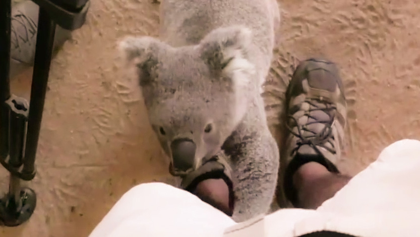 Darcy the Koala Documentary Production 100 Acts of Kindness Films on Gold Coast and Brisbane